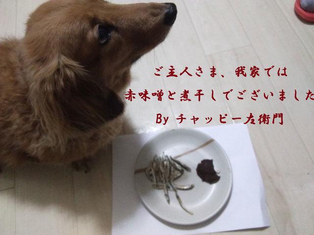 ちゃっピー.jpg