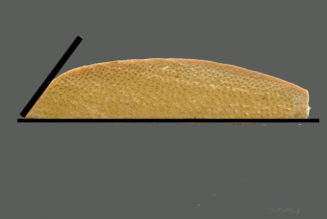 竹の刃断面.jpg